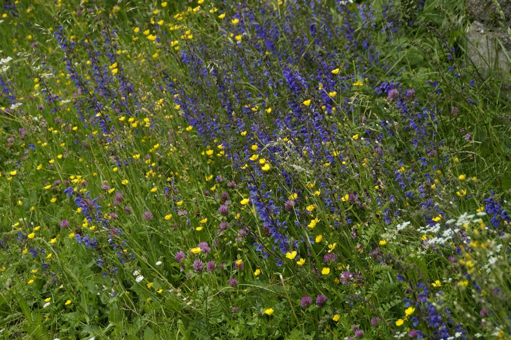 how to create a wildflower garden for bees - Wildflower Garden