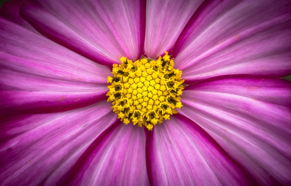 My Top 5 Flowers For Beneficial Bugs And Bees